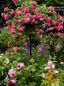 Опоры под штамбовые розы